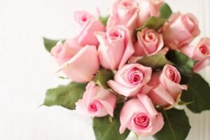 Some Of Best Flowers That Will Pour Your Heart Out